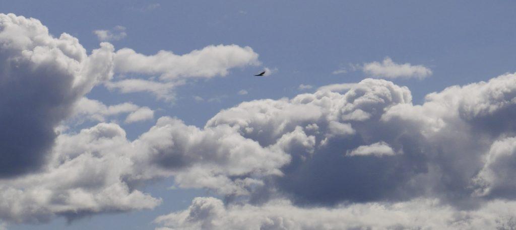 Bird in Clouds